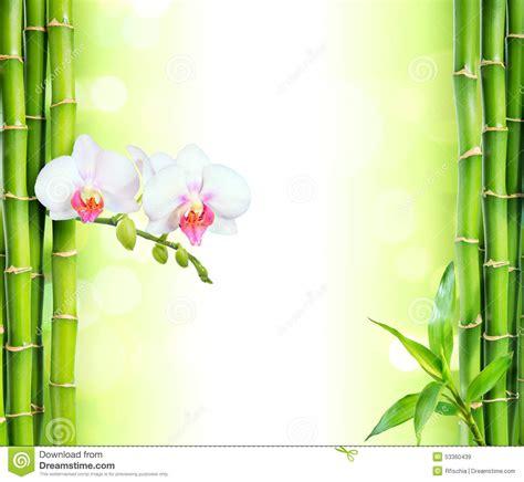 imagenes zen con velas orchid 233 e blanche avec le bambou photo stock image 53360439