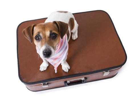 pet jet setter dog treat bag pet air travel by private jet charter