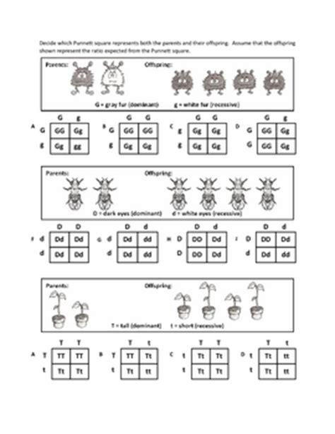 Punnett Square Worksheet by Genotypes And Punnett Squar By Haney Science Teachers
