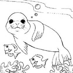 seal coloring pages seals coloring pages