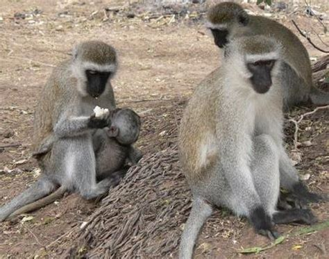 nicko the tale of a vervet monkey on an farm books the what do you quiz winners and prizes announced