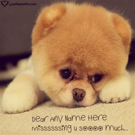 puppy i you i miss you puppy www pixshark images galleries with a bite