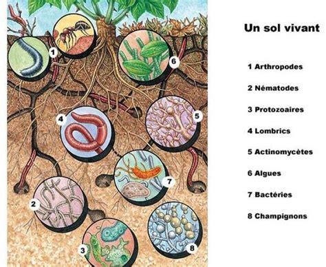 Le De Sol by Bien Travailler Le Sol Dans Un Potager D 233 J 224 Install 233