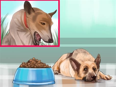 simple ways     dog  pregnant wikihow