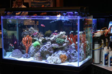 saltwater aquarium design ideas memes
