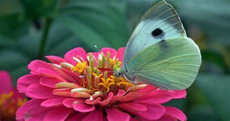 top  flowers  attract butterflies  hummingbirds