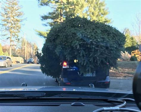 griswold christmas tree on the car stop car with tree on top the daily courier prescott az