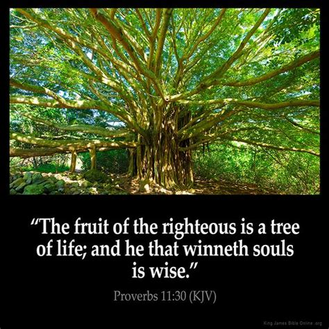 bible verse fruit of the tree proverbs 11 30 bible king version trees and a tree