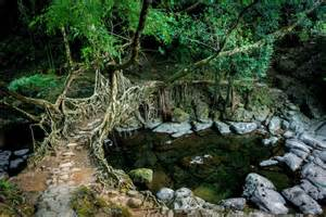 what is root bridge stunning living root bridges of india are grown not