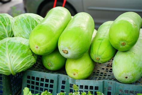 fakta nutrisi  manfaat buah kundur bligo honestdocs