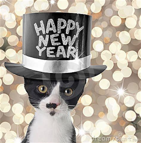 new year cat images cooinda cat resort kapers