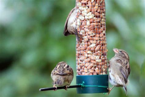 Rspb Big Garden Birdwatch Start Twitching by Learning About Garden Birds With The Big Garden Birdwatch