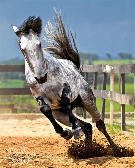 running free horses photo 30431451 fanpop
