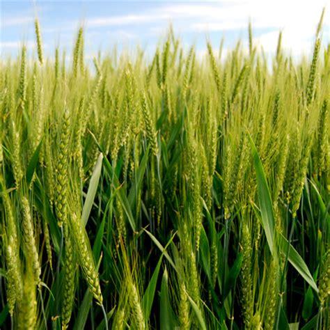 alimentazione biodinamica alimentazione biologica biodinamica e convenzionale