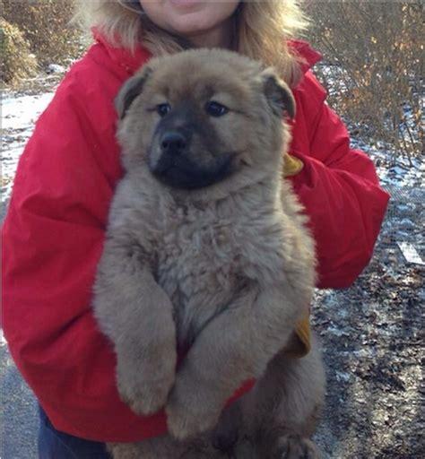 puppy rescue st louis major winter rescue effort gateway pet guardians