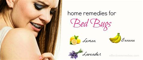 27 home remedies for bed bugs bites removal on