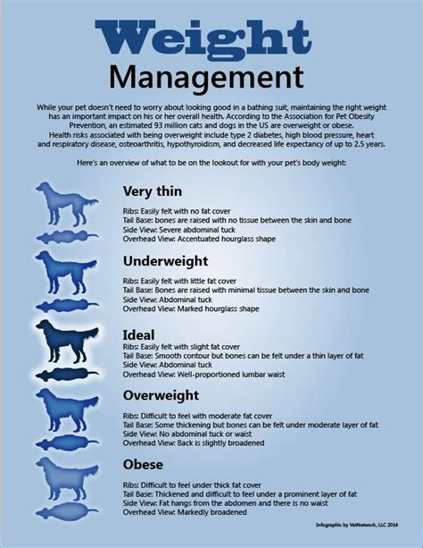 weight management infographic 150 best pet health tips and information images on