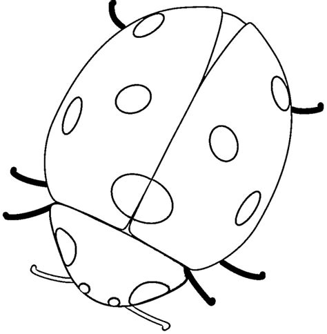 Ladybug Pictures To Color by Free Printable Ladybug Coloring Pages For