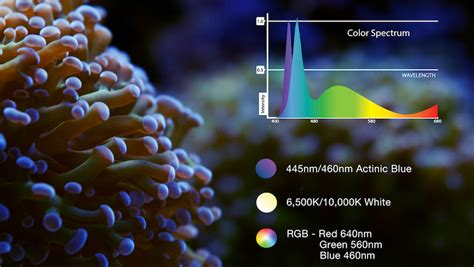 best light spectrum for coral growth current usa 36 48 quot orbit ic led light loop 36 watts
