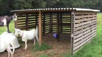 Cheap Hutches For Sale Our Goat Shelter Using Free Pallets Youtube