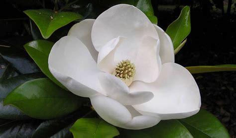 imagenes extraordinarias bonitas im 225 genes las 15 flores m 225 s hermosas del mundo un mundo
