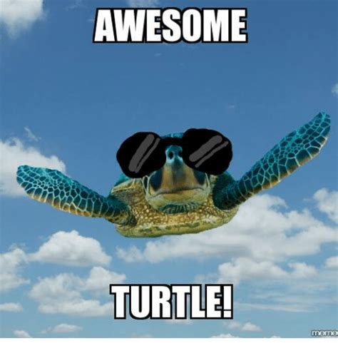 turtle meme awesome turtle meme on me me