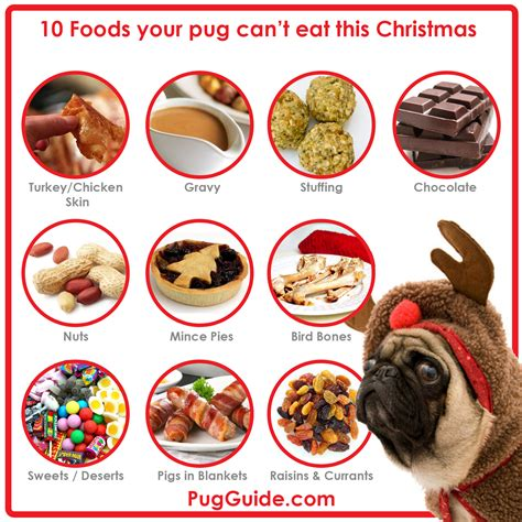 why can t dogs eat onions 10 foods pugs can t eat at