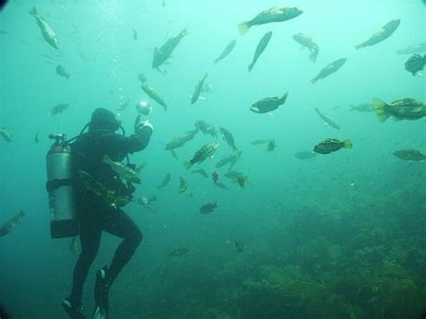 Kelp Bed by Southern California Kelp Beds Project Aware