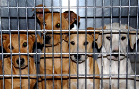 how to report a puppy mill report majority of pet sales linked to puppy mills
