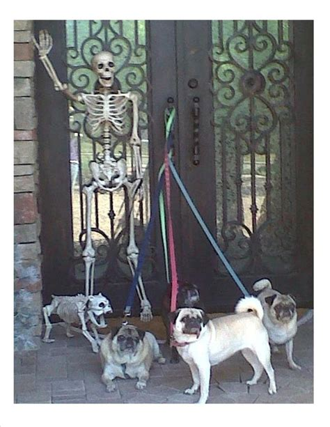 pug skeleton 180 best images about pug friendzy on posts pug and pug