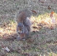 hair loss in squirrels hair loss in squirrels hair loss in squirrels the new york