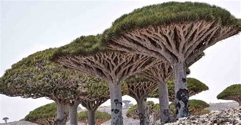 the surreal island filled with strangely beautiful plants