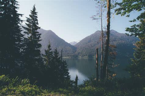 washington state landscape vintage landscape trees mountains nature forest explore wilderness pacific northwest