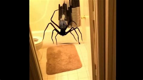big spider in bathroom big scary spider in my bathroom biggest spider ever youtube