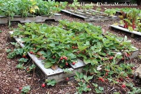 Strawberry Garden Ideas Strawberry Pallet Planters For Fresh Strawberries