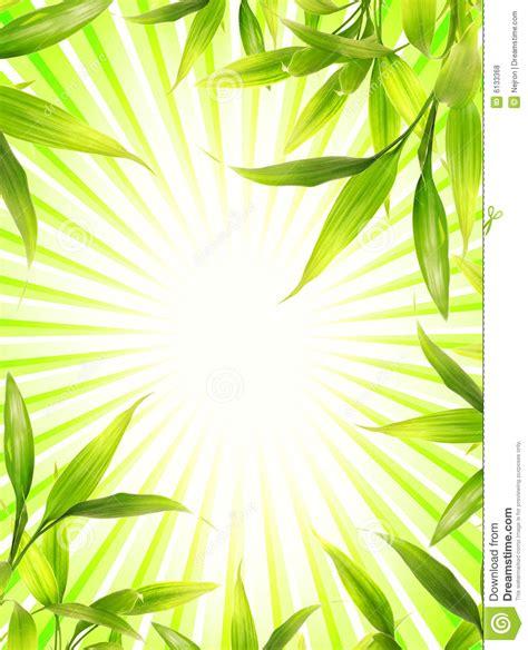 bamboo plant frame royalty free stock photos image 6133368