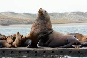 how much is the biggest boat in the world head and shoulders above the rest gigantic sea lion