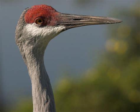 birds in florida pentax user photo gallery