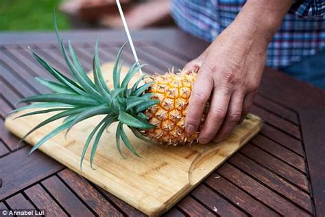 chef grows pineapple  garden   years