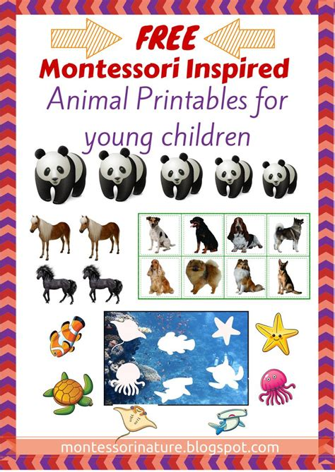 montessori printables for preschool 321 best images about montessori free printables