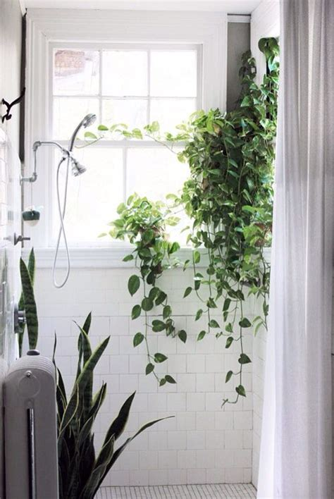 flowers in the bathroom plants in the bathroom bathrooms pinterest