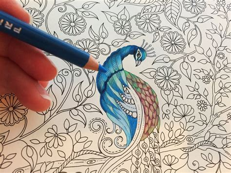 color pencil for coloring book peacock part 1 3 secret garden coloring book