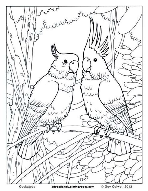 jungle animals coloring pages coloring home