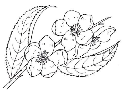 fiori di pesco da colorare disegni da colorare fiori disegni per bambini disegni