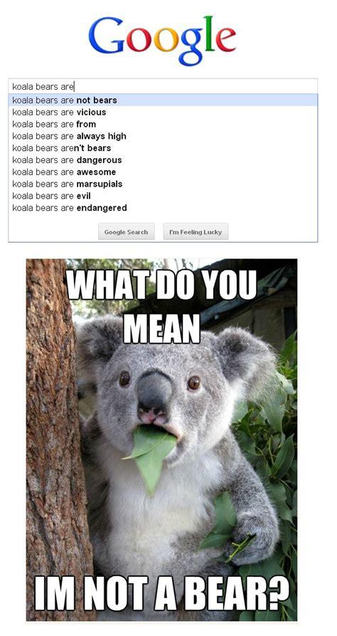 Koala Bear Meme - 25 best ideas about koala meme on pinterest shock meme