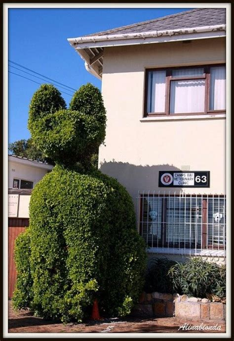 topiary cat 1000 images about cats in the garden on