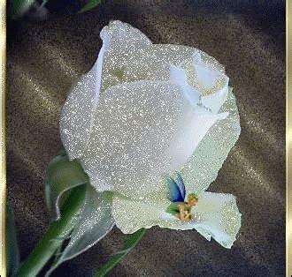 imagenes de rosas blancas animadas tablas y marcos para poemas im 225 genes de rosas blancas