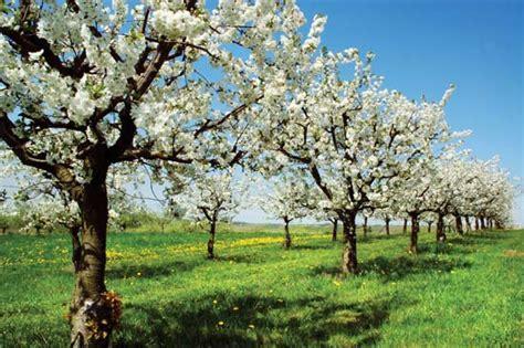 what is a spring spring season britannica com