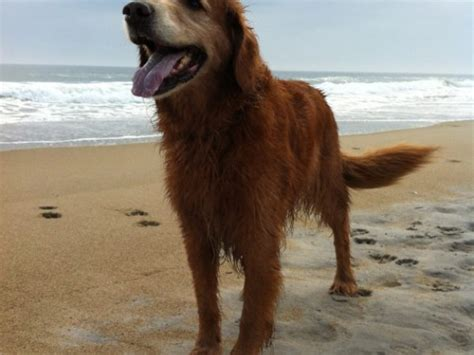 beaches where dogs are allowed where and when are dogs allowed on the hton nh patch