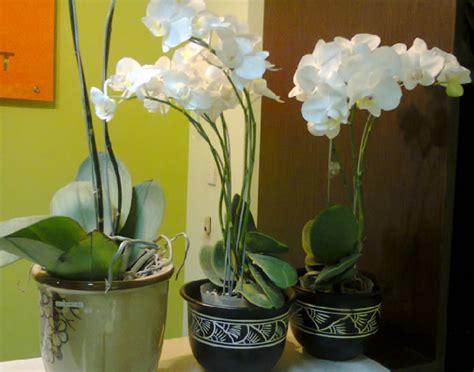 tanaman hias  ruangan rumah  cantik